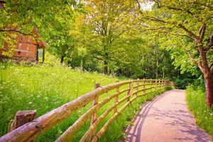 Фото бесплатно забор, трава, зеленый