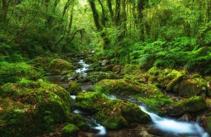 Фото бесплатно лес, деревья, камни, речка, река, природа, пейзаж
