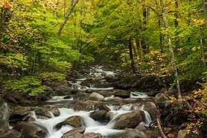 Бесплатные фото осень, лес, деревья, камни, речка, природа