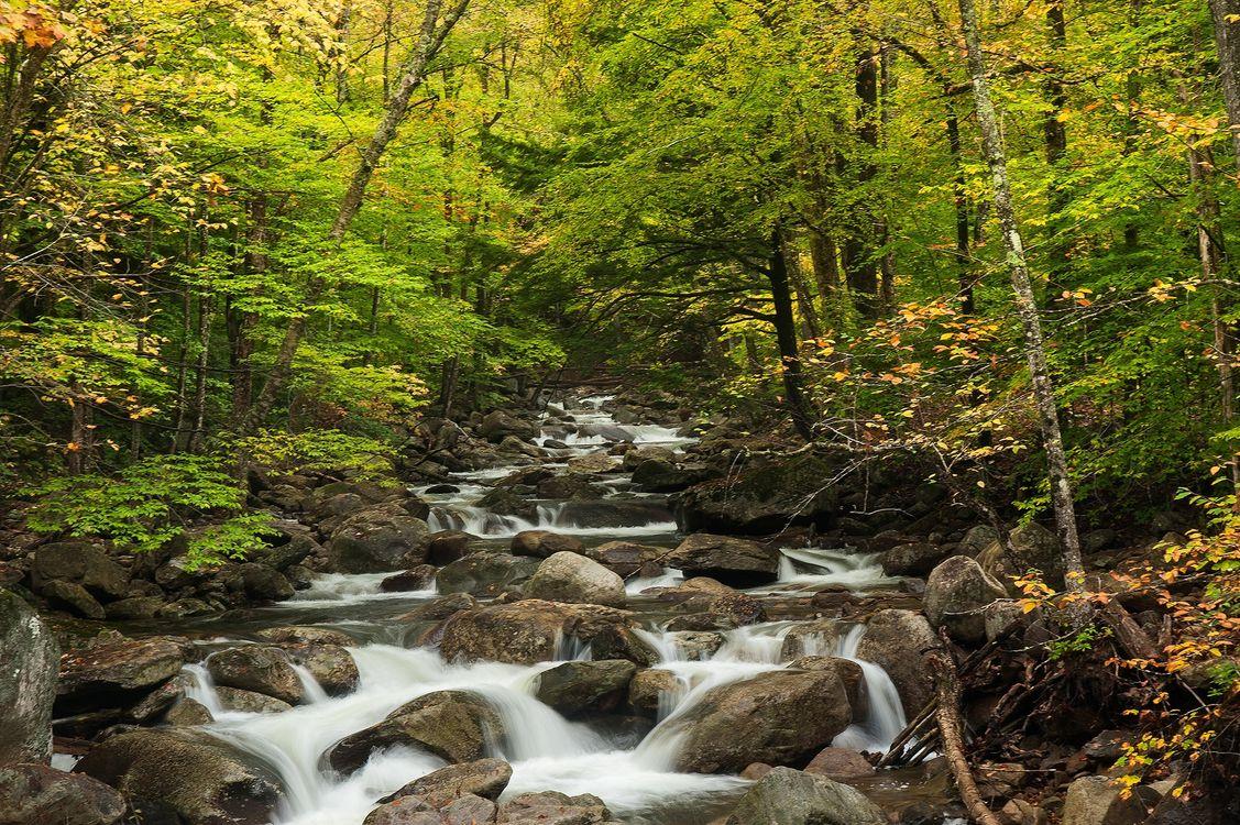 Фото бесплатно осень, лес, деревья, камни, речка, природа, природа