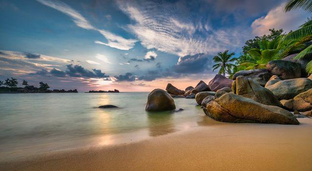 Photo free seychelles, palm trees, sand