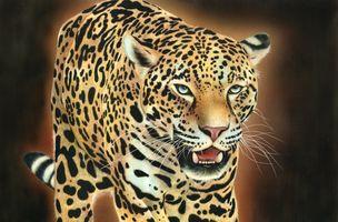 Бесплатные фото леопард,дикая кошка,животное,хищник,морда,оскал,art