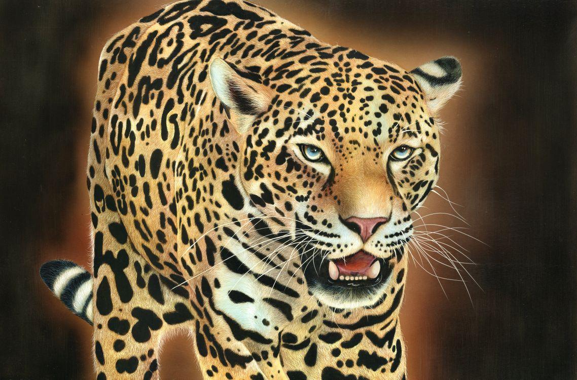 Фото бесплатно леопард, дикая кошка, животное - на рабочий стол