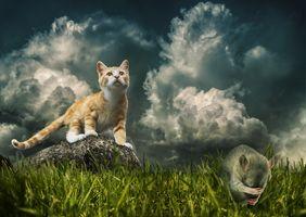 Бесплатные фото поле,кот,кошка,котёнок,трава,крыса,фантазия