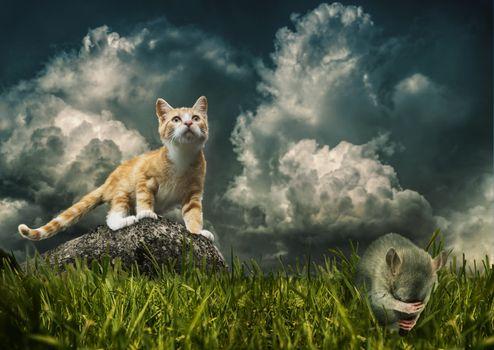Photo free box, cat, kitten