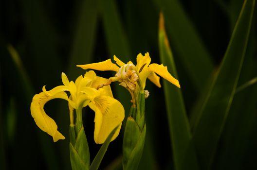 Фото бесплатно цветок, парк, тень