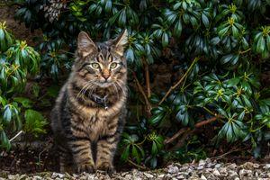 Бесплатные фото кот,кошка,взгляд,домашнее животное