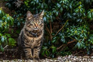 Фото бесплатно кошка, домашнее животное, смотрите