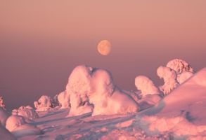 Снежные львы под луной · бесплатное фото