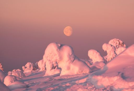 Snow lions under the moonlight