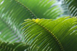 Фото бесплатно макро, тропики, папоротник и хвощ