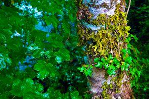 Бесплатные фото North Cascades National Park,дерево,ствол,ветки,листья,природа