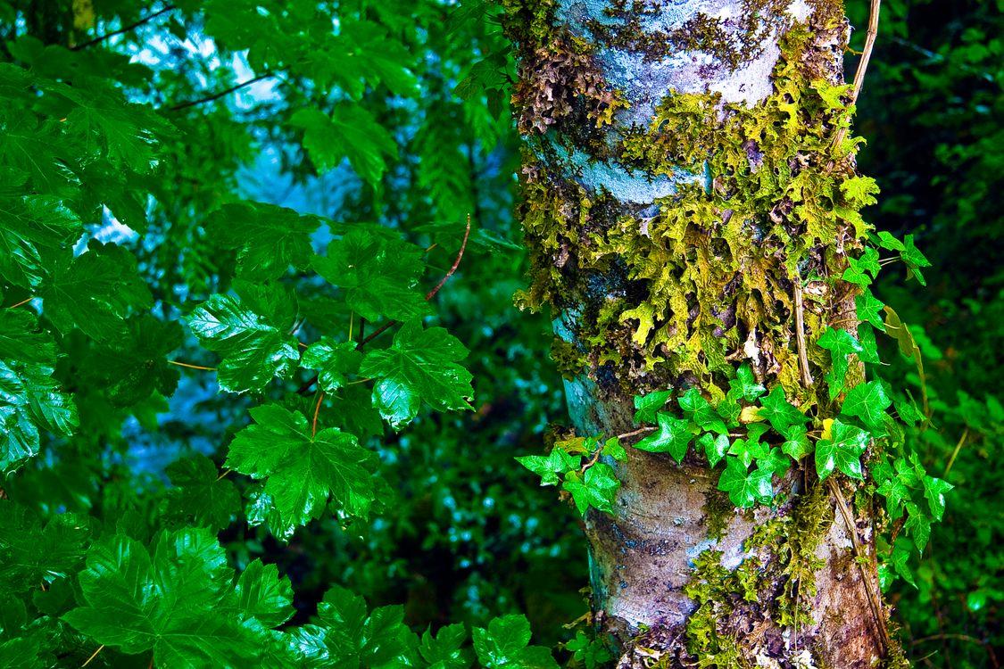 Фото бесплатно North Cascades National Park, дерево, ствол, ветки, листья, природа, природа