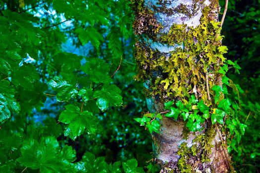 Фото бесплатно North Cascades National Park, дерево, ствол