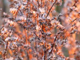 Заставки Парк, зима, деревья