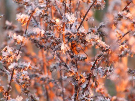 Бесплатные фото Парк,зима,деревья
