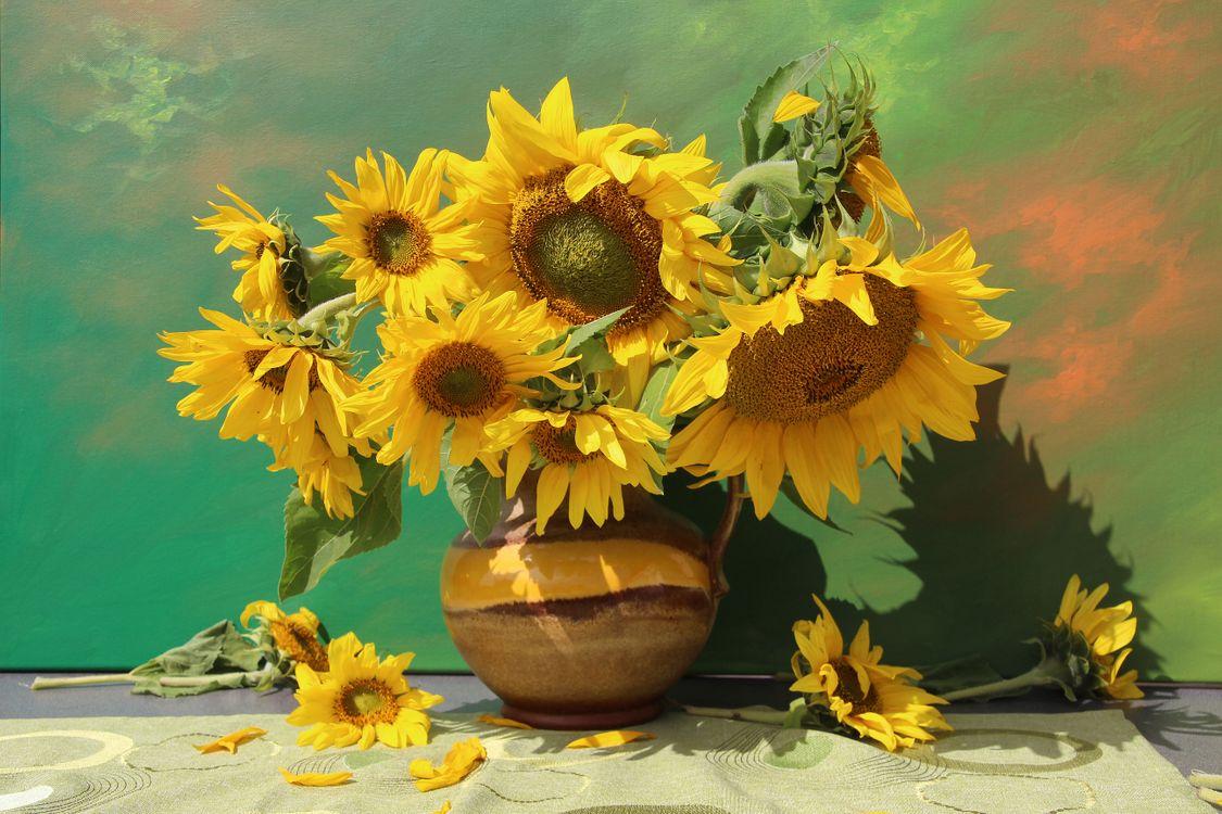 Фото бесплатно подсолнух, подсолнухи, цветы, флора, ваза, натюрморт, букет, цветы