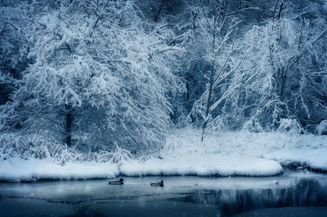 Фото бесплатно природа, снег, деревья - на рабочий стол