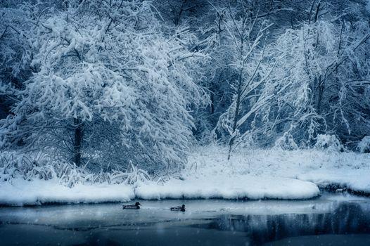 Заставки природа, снег, деревья