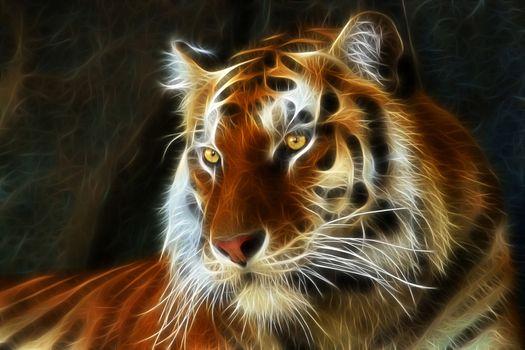 Photo free art, fractal, tiger