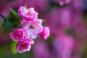 Растущая яблоня в саду