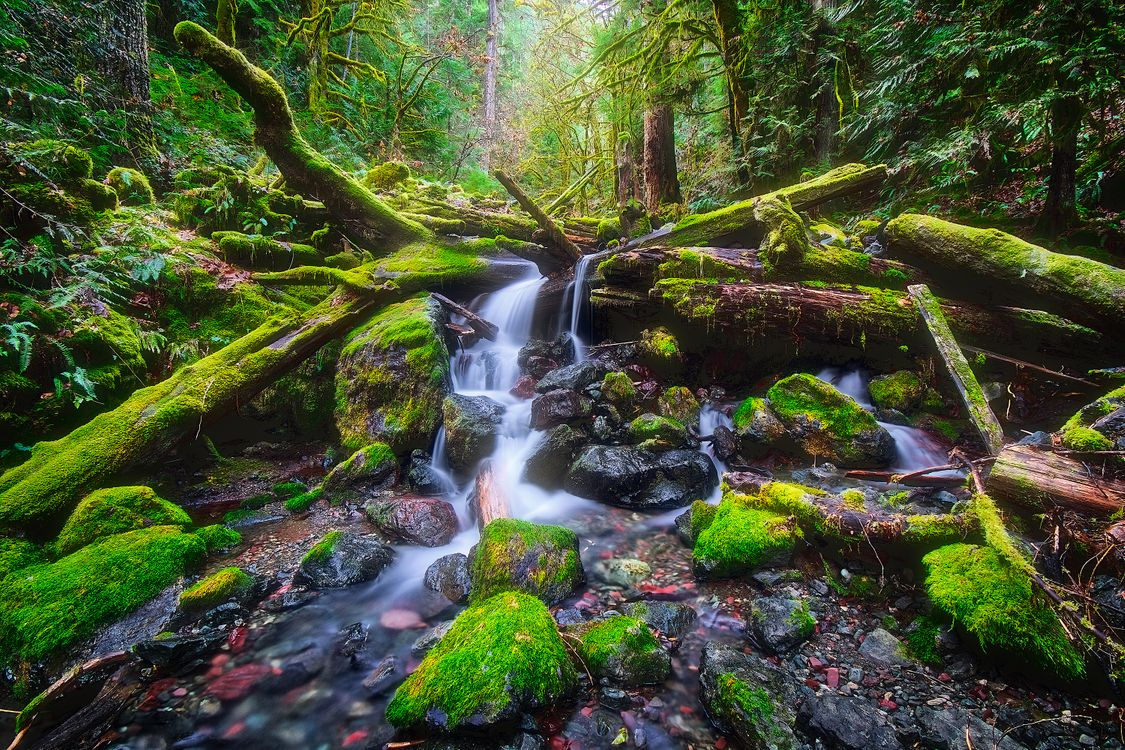 Free photo Copper Creek in Washington State near Lake Cushman, copper Creek, Washington - to desktop