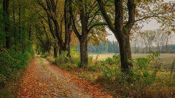 Фото бесплатно поле, осень, осенние цвета