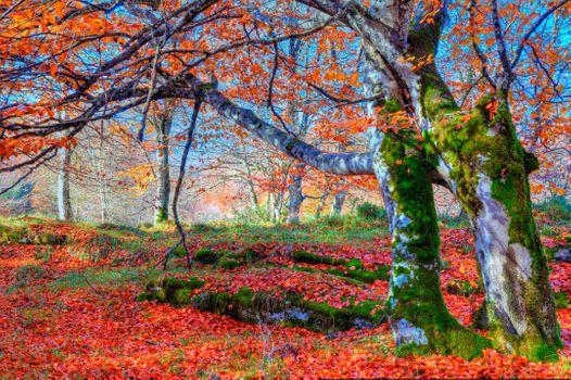 Заставки лес, природа, осенние листья