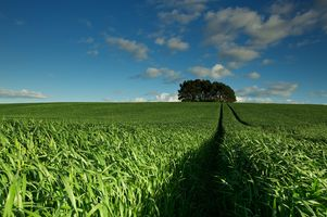 Бесплатные фото поле,трава,колея,деревья,небо,пейзаж