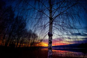 Photo free Kramfors, trees, sky