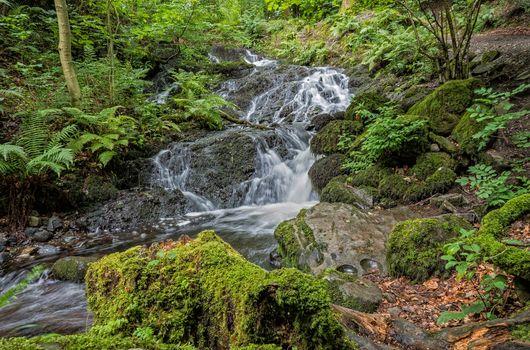Бесплатные фото водопад,лес,камни,мох,деревья,течение,природа,пейзаж