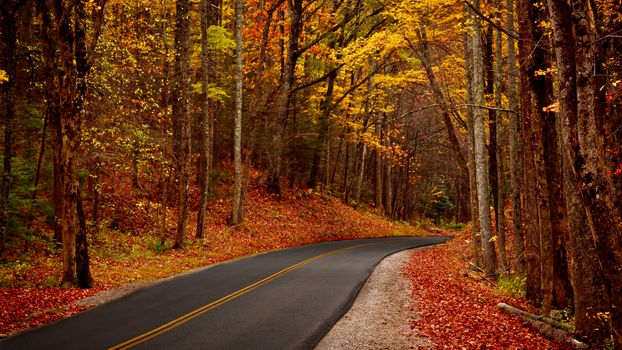 Photo free Great Smoky Mountains, autumn, road