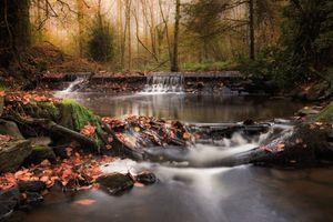 Заставки осенние листья, деревья, природа