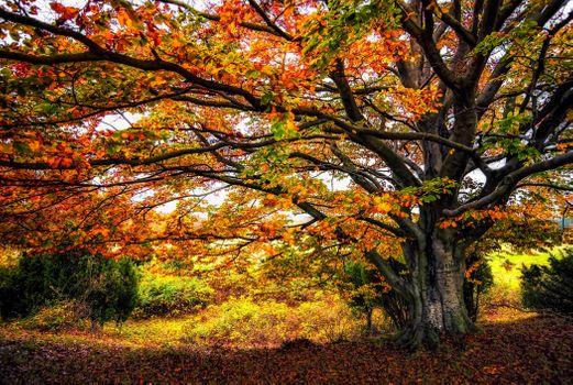 Photo free autumn, autumn tree, forest
