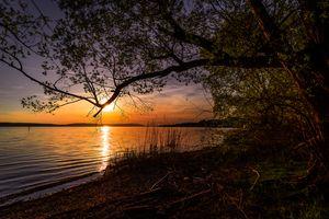 Фото бесплатно природа, дерево, сумерки, небо, солнце, золотой свет, облака, настроение, вечернее небо, боденское озеро, вечер, пейзаж, отражение