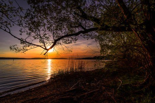 Фото бесплатно природа, дерево, сумерки, небо, солнце, золотой свет, облака, настроение, вечернее небо, боденское озеро, вечер, пейзаж
