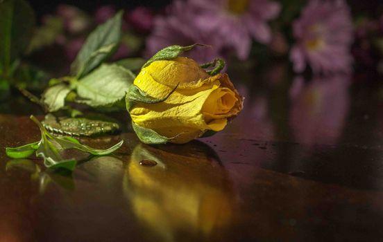 Бесплатные фото роза,цветок,жёлтая,розы,цветы,флора