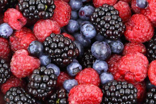 Photo free fruit, fresh, blueberry