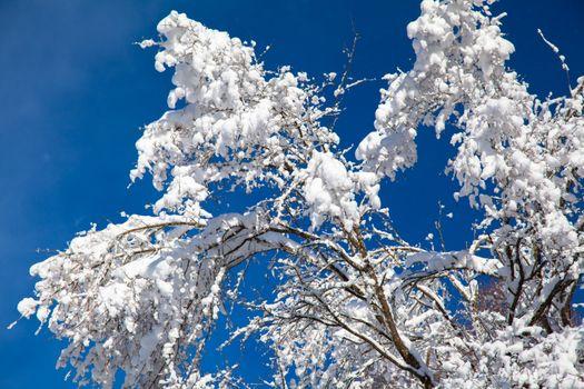 Фото бесплатно дерево, ветки, снег