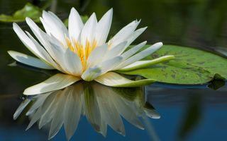 Заставки природа, вода, лилии