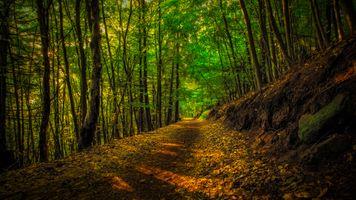 Фото бесплатно Pfalzerwald, Rheinland-Pfalz, Germany