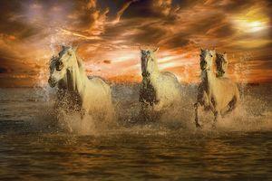 Заставки закат, море, лошади