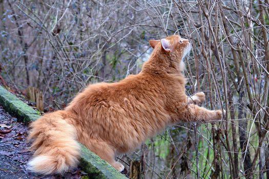 Фото бесплатно кот, лезет, пушистый
