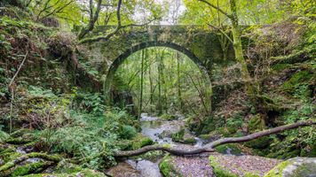 Фото бесплатно лес, река, мост