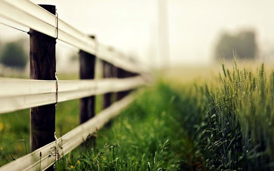 The fence and grass