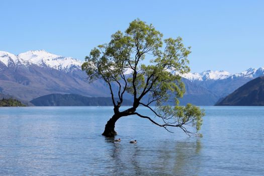 Заставки дерево Ванака,озеро Ванака,Новая Зеландия,горы,дерево,вода,природа,пейзаж