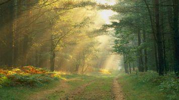 Фото бесплатно свет, тропа, деревья
