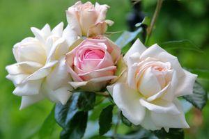 Белые цветы · бесплатное фото