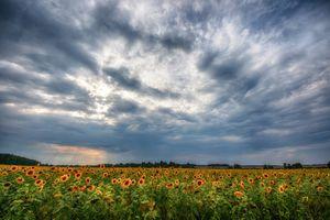 Бесплатные фото закат,поле,небо,цветы,подсолнухи,пейзаж