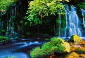 Заставки мох, лес, Япония